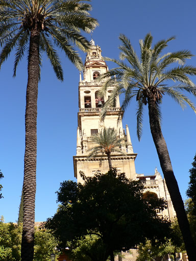 Palm trees and Mesquita tower