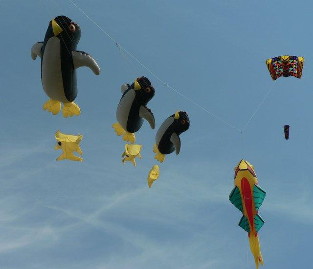 Kites in animal shapes