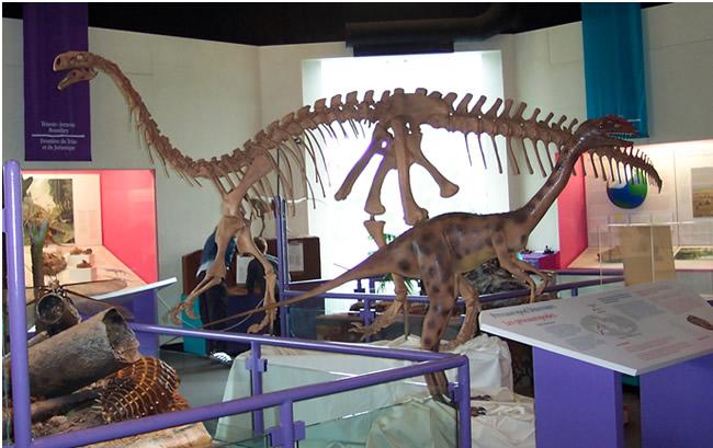 Dinosaur displays