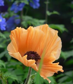 Flower in Culzean garden